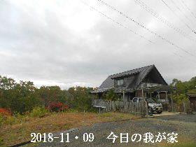 2018-11・09 今日の里山は・・・ (1).JPG