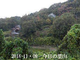 2018-11・09 今日の里山は・・・ (4).JPG
