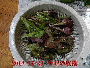 2018-11・23 今日の収穫 (2).JPG
