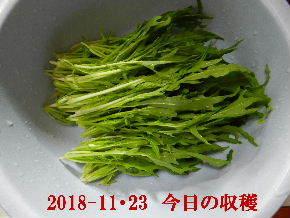 2018-11・23 今日の収穫 (3).JPG
