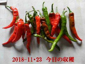 2018-11・23 今日の収穫 (5).JPG