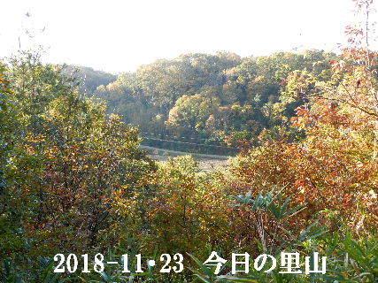 2018-11・23 今日の里山は・・・ (3).JPG