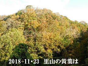2018-11・23 今日の里山は・・・ (5).JPG