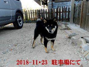 2018-11・23 今日の麻呂 (4).JPG