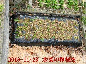 2018-11・23 我が家のスナップ・・・ (9).JPG
