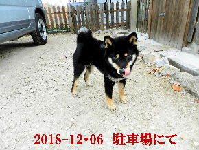 2018-12・06 今日の麻呂 (4).JPG