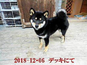 2018-12・06 今日の麻呂 (7).JPG