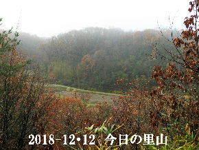 2018-12・12 今日の里山は・・・ (3).JPG