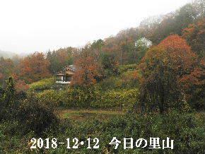 2018-12・12 今日の里山は・・・ (4).JPG