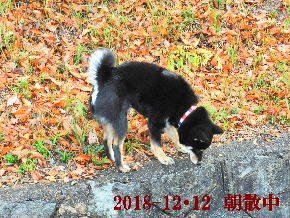 2018-12・12 今日の麻呂 (1).JPG