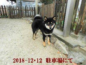 2018-12・12 今日の麻呂 (6).JPG