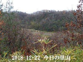 2018-12・22 今日の里山は・・・ (3).JPG