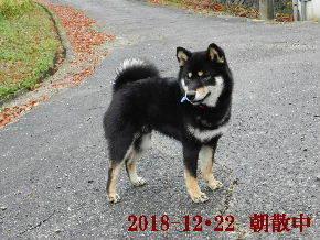2018-12・22 今日の麻呂 (1).JPG