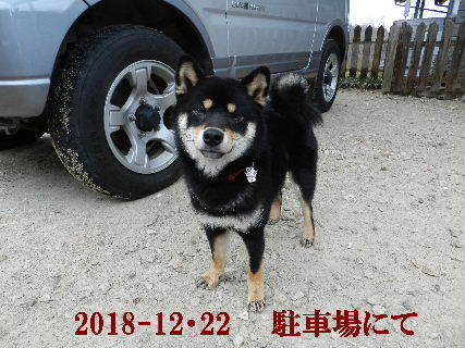 2018-12・22 今日の麻呂 (5).JPG
