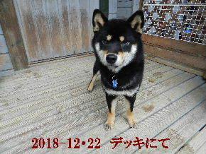 2018-12・22 今日の麻呂 (7).JPG