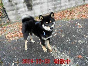 2018-12・23 今日の麻呂 (2).JPG