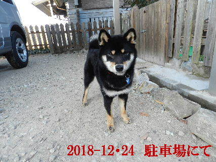 2018-12・24 今日の麻呂 (3).JPG