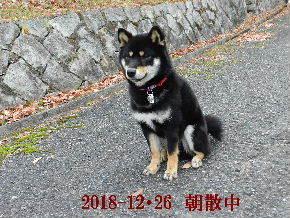 2018-12・26 今日の麻呂 (3).JPG