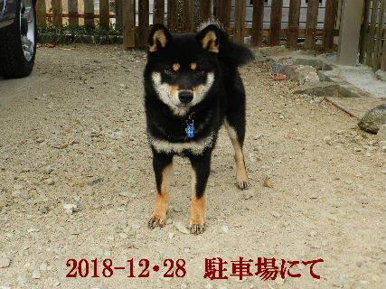 2018-12・28 今日の麻呂 (3).JPG