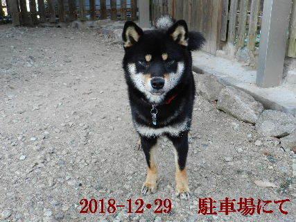 2018-12・29 今日の麻呂 (4).JPG