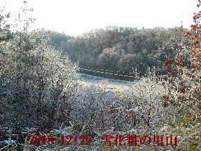 2018-12・29 雪化粧の里山 (3).JPG