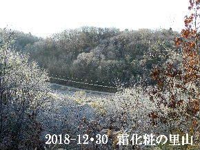 2018-12・30 今日の里山は・・・ (3).JPG