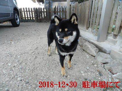 2018-12・30 今日の麻呂 (4).JPG