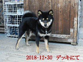 2018-12・30 今日の麻呂 (6).JPG