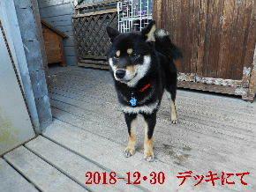 2018-12・30 今日の麻呂 (8).JPG