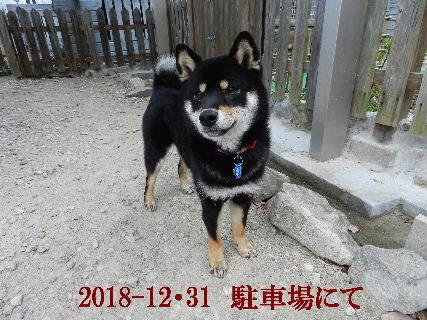 2018-12・31 今日の麻呂 (4).JPG