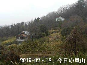 2019-02・19 今日の里山は・・・ (4).JPG