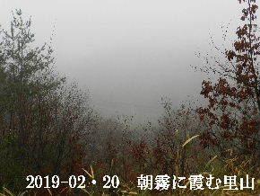 2019-02・20 今日の里山は・・・ (3).JPG