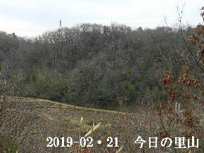 2019-02・21 今日の里山は・・・ (3).JPG