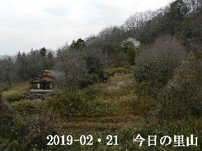 2019-02・21 今日の里山は・・・ (4).JPG