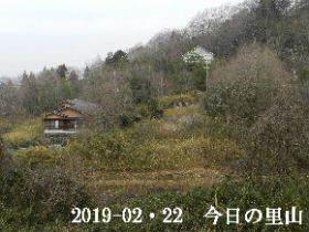 2019-02・22 今日の里山は・・・ (4).JPG