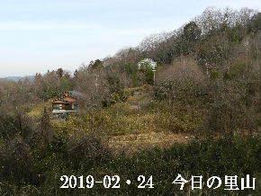 2019-02・24 今日の里山は・・・ (4).JPG