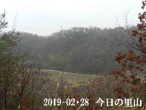 2019-02・28 今日の里山は・・・ (3).JPG