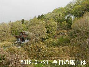 2019-04・21 今日の里山は・・・ (4).JPG