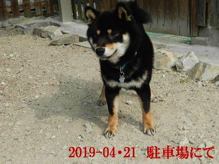 2019-04・21 今日の麻呂 (5).JPG
