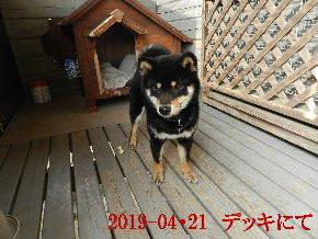 2019-04・21 今日の麻呂 (7).JPG