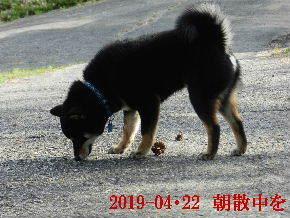 2019-04・22 今日の麻呂 (1).JPG