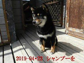 2019-04・22 今日の麻呂 (8).JPG