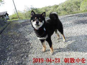 2019-04・23 今日の麻呂 (1).JPG