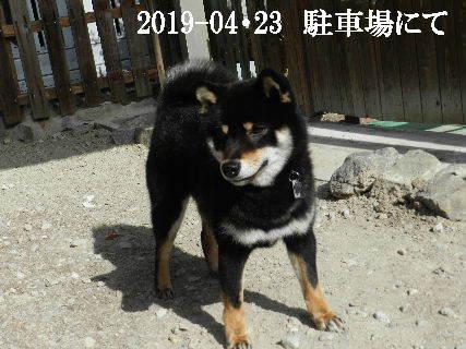 2019-04・23 今日の麻呂 (4).JPG