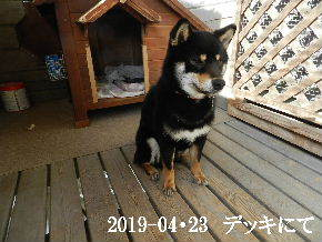 2019-04・23 今日の麻呂 (6).JPG
