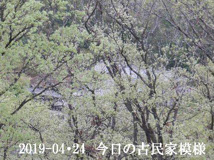 2019-04・24 今日の古民家模様.JPG