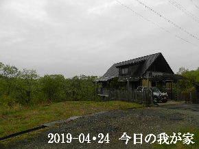 2019-04・24 今日の里山は・・・ (1).JPG