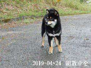 2019-04・24 今日の麻呂 (2).JPG