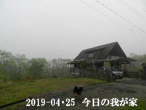 2019-04・25 今日の里山は・・・ (1).JPG