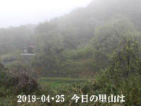 2019-04・25 今日の里山は・・・ (4).JPG